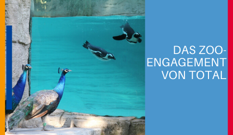zoo-engagement-total-291119